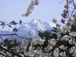 甲斐駒ヶ岳-20084.25