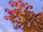 紅葉-2008.10.22