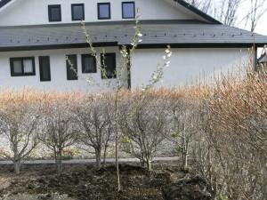 桜-2009.4.19
