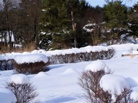雪景色-2007.1.8