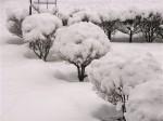 雪景色-2009.1.22