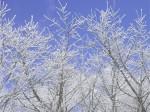 雪景色-2009.3.3