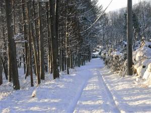 雪景色-2010.2.2
