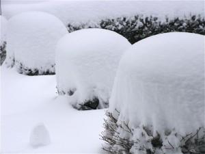 雪景色-2010.3.11-1