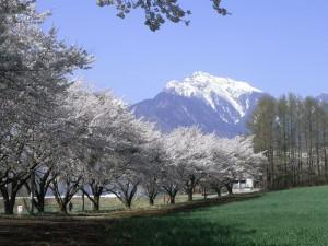 甲斐駒ヶ岳-2012.4.24