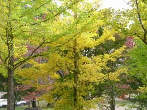 紅葉-2011.10.24