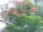 紅葉-2013.9.26