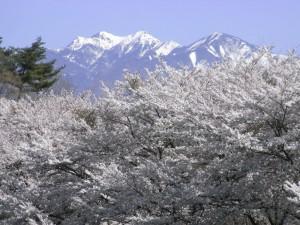 八ヶ岳-2012.4.24