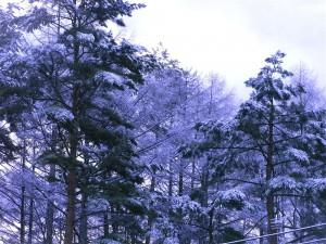 雪景色-2013.12.27