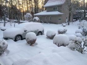 我が家の庭の雪景色-2018.1.23